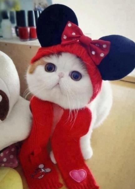 Cute Cat Costume