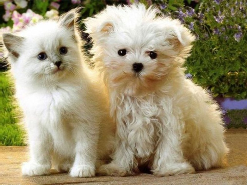 White Dog and Cat Photo