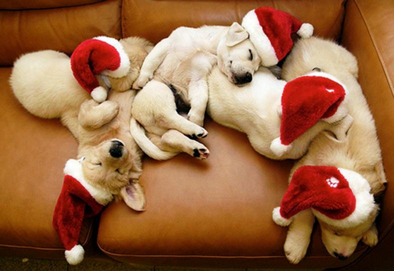 Sleeping Puppies With Christmas Hats