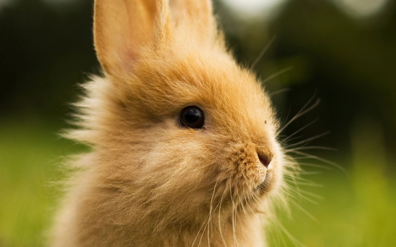 Very Beautiful Rabbit
