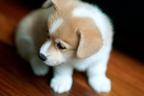 Most Inspiring Puppy Brown Adorable Dog - cute-puppy-white-and-brown  You Should Have_9410053  .jpg