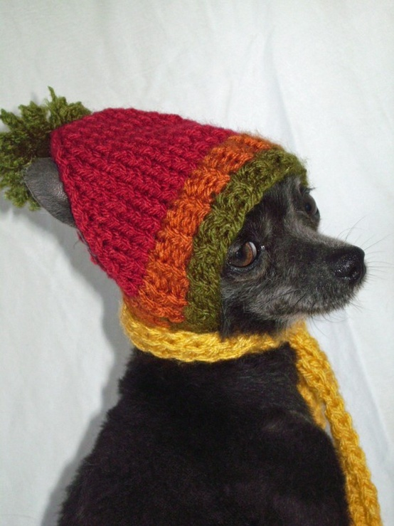 Cute little breed dog with a hat