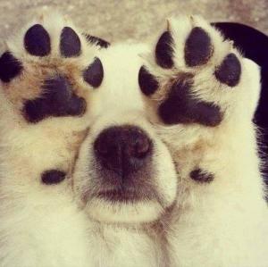 Funny Peekaboo Puppy