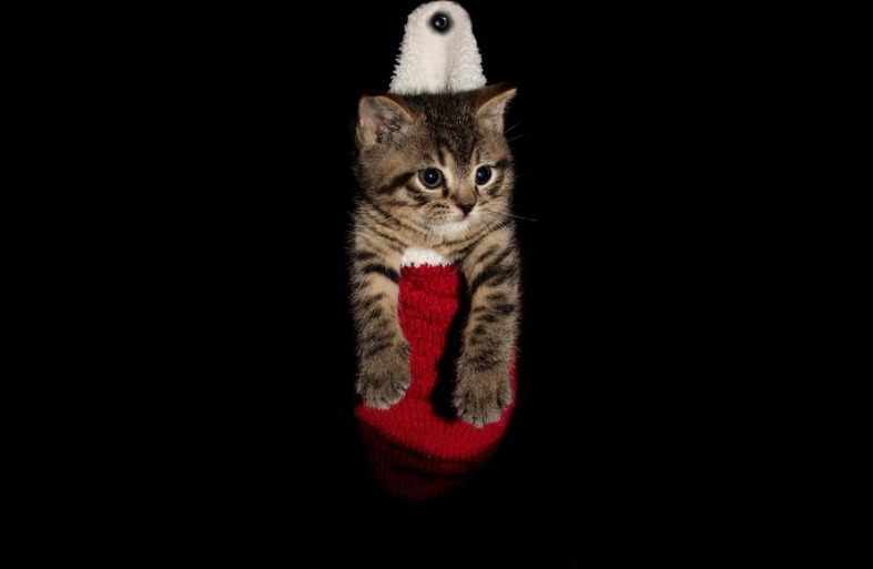 Cat in The Christpas Socks