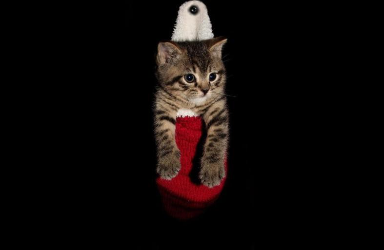 Cat in The Christpas Socks
