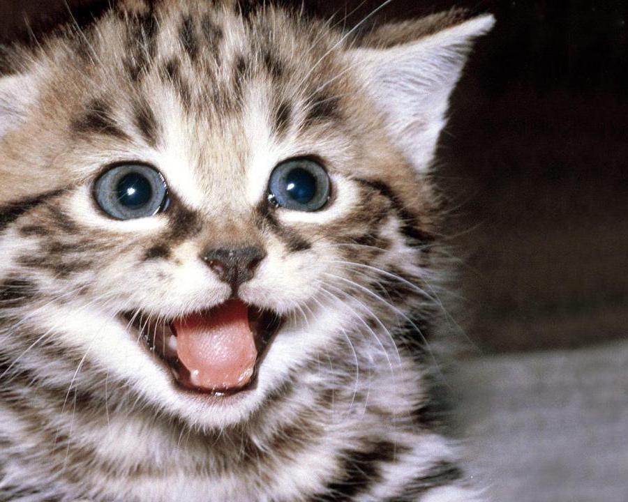 best clumping cat litter 2018