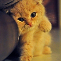 Cute Orange Kitty