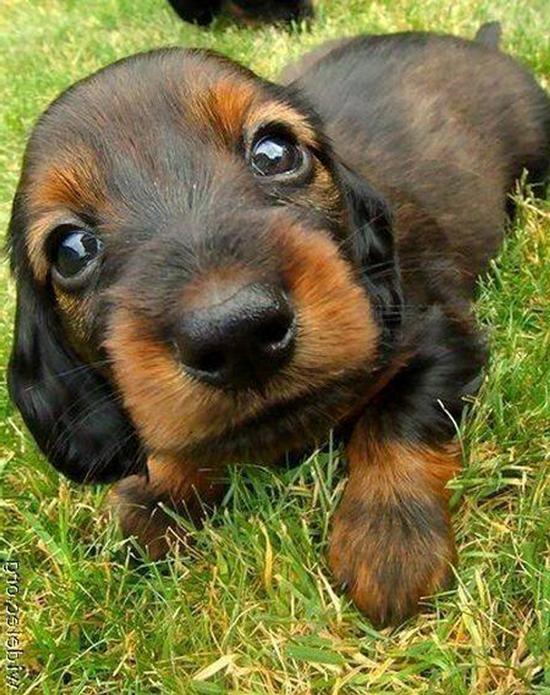 Sweet Brown Doggy