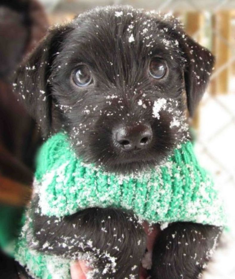 Sweet Black Dog in The Snow
