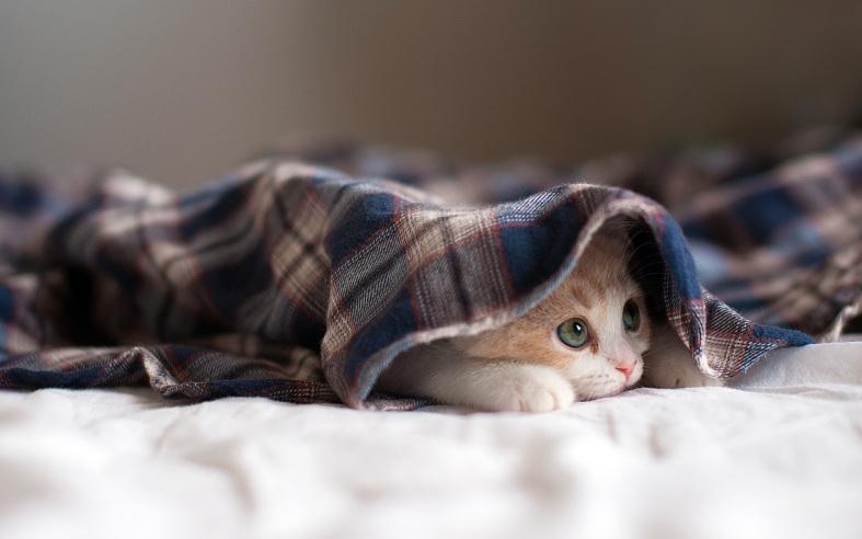 Hiding kitten