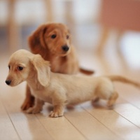 Cute Little Dog-Brothers