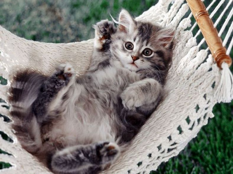 Cute Laying Kitten