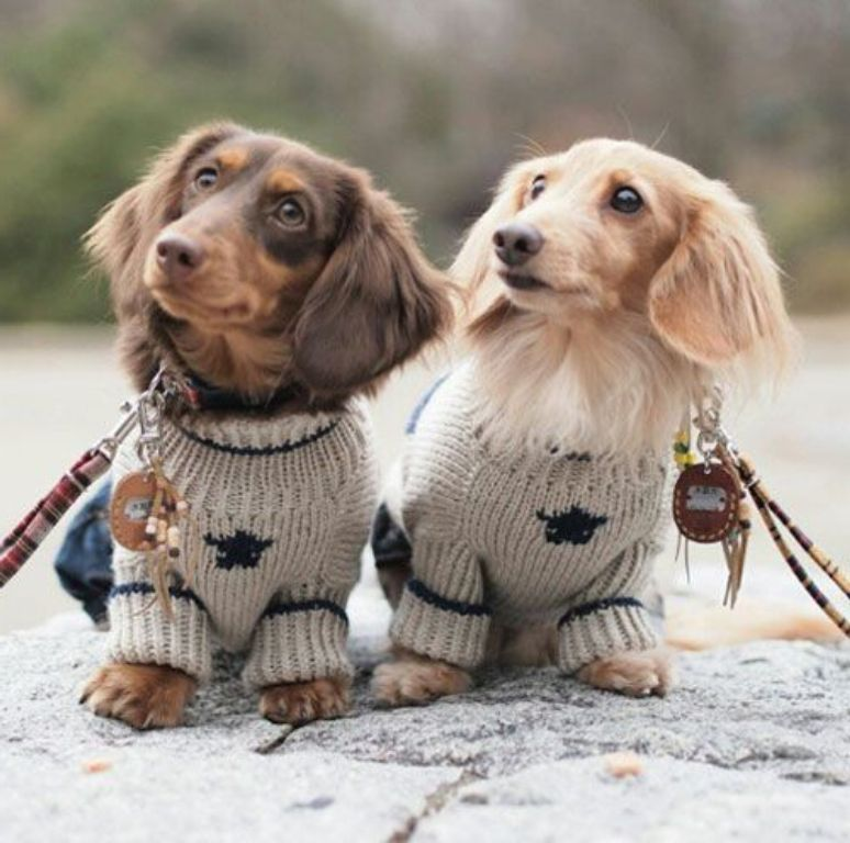 Sweet Curious Puppies