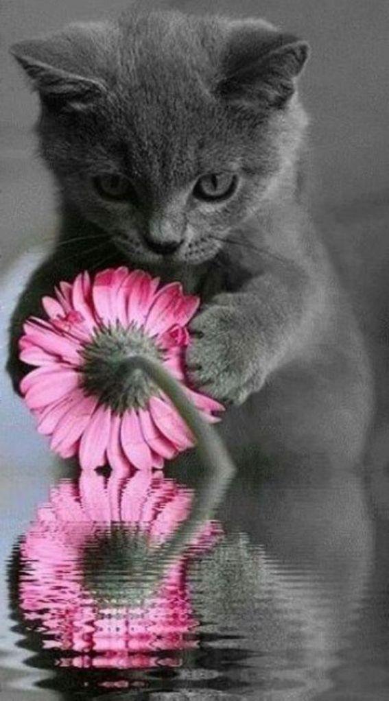 sweet-kitten-with-flower