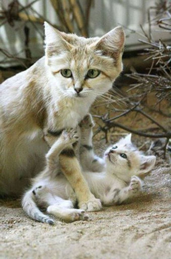 Beautiful Wild Cat And her Child