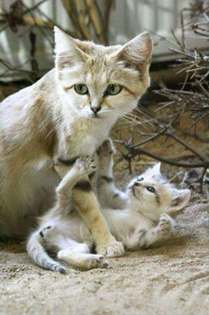 Beautiful Wild Cat And her Child