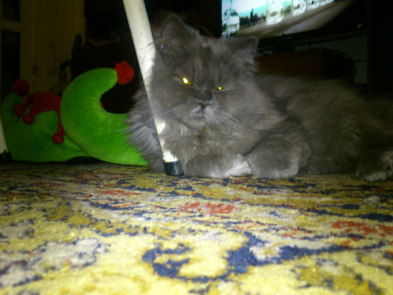 Gray Cat Boy
