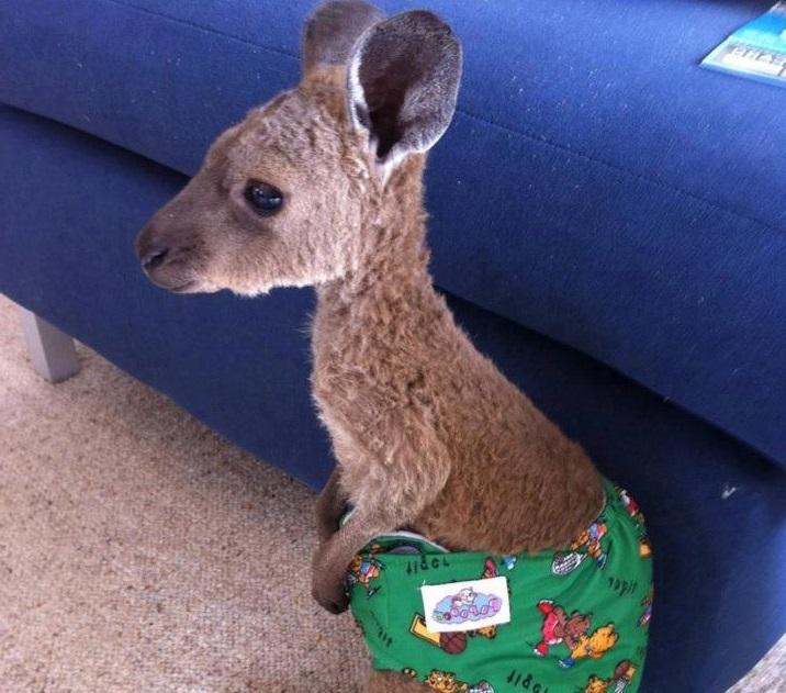 Australian Kangaroo Baby With Clothes